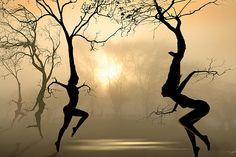 Dancing Trees Digital Art - Fine Art Print - Igor Zenin