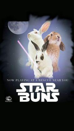 Star Buns