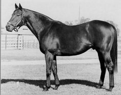 Boldnesian, Tapit's fifth generation sire. winner of the Santa Anita Derby. Son of the great champion and stallion Bold Ruler and the mare Alanesian, daughter of Polynesian (Polynesian being the Preakness winning sire of Northern Dancer)