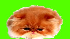 GREEN SCREEN CAT, SONY Vegas Pro, Adobe After Effects, VIDEO EDITING, ви...
