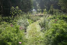 Getting started with biodynamic gardening