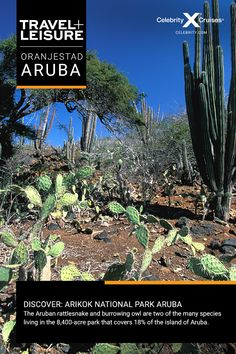 Discover Aruba with Celebrity Cruises. View top vacation itineraries and exciting shore excursions. Book your award-winning cruise to Aruba today! Celebrity Cruise Line, Celebrity Cruises, Aruba Caribbean, Oranjestad, Us Sailing, Cruise Destinations, Shore Excursions, Cruise Travel, Ways To Travel