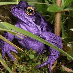 Purple Frog,...amazing!...