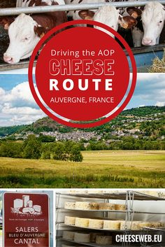 We discover the five AOP cheeses of Auvergne, France, at two of the region's best cheese farms on the Route des Fromages AOP d'Auvergne.
