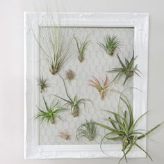 Looking for a fun activity that doubles as DIY home d cor Repurpose an old frame to display your favorite air plants All you need is chicken wire for the backing and paper clips to use as plant hangers boredathome diyprojectideas activity repurpose bhg #