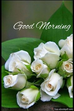 In today's post, we are presenting for you Amazing Good Morning Images With Beautiful Flowers. You will definitely like this great collection of good morning images of today. Good Morning Images Flowers, Good Morning Beautiful Images, Good Morning Roses, Good Morning Cards, Morning Morning, Good Morning Picture, Good Morning Messages, Good Morning Friends, Good Morning Greetings