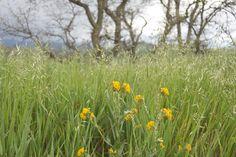 Wildflowers at Ventana Hills.