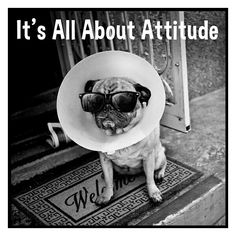 Funny pics Silly Pics, Silly Pictures, Funny Pics, French Bulldog, Attitude, Dogs, Animals, Fanny Pics, Funny Photos