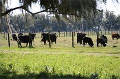 Buy Organic meats in Florida, they ship too!