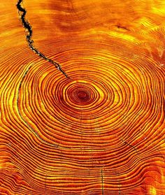 Orange tree rings