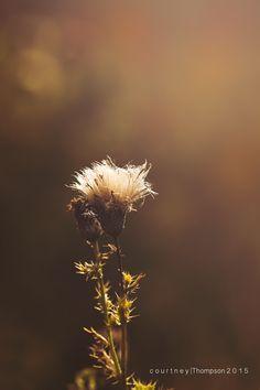 Macro/ fall tones - Courtney Thompson photography