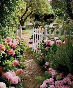 picket fences + hydrangeas