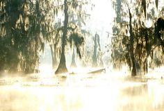 Swamp Glare