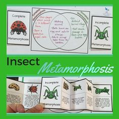 Student's will be able to differentiate between complete metamorphosis and incomplete metamorphosis in this activity found in Animal Diversity: Invertebrates - Life Science Interactive Notebook 5th Grade Science, Science Curriculum, Science Biology, Science Classroom, Teaching Science, Science Education, Science Activities, Life Science, Science Ideas