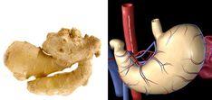 Alimentos que se parecen a tus órganos!!