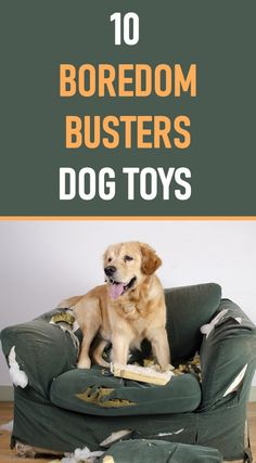 Is your dog bored? Need some simple ways to keep your dog busy and entertained? Here are 10 toys to relieve dog boredom. Is your dog bored? Need some simple ways to keep your dog busy and entertained? Here are 10 toys to relieve dog boredom. Best Dog Toys, Best Dogs, Toys For Bored Dogs, Dog Toys For Boredom, Brain Games For Dogs, Dog Enrichment, Cat Shampoo, Dog Gadgets, Dog Activities
