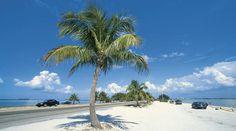 Palm tree living.