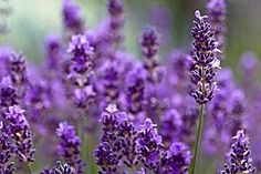 How to Time Flowering Perennials for All-Season Color - For Dummies