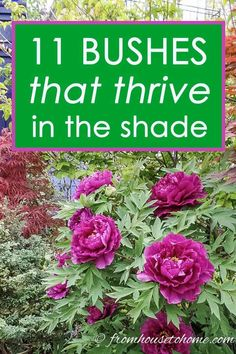 Shade Loving Shrubs: 11 Beautiful Bushes To Plant Under Trees These bushes that thrive in the shade will give you tons of landscaping ideas. They can add texture to backyards and many of them are evergreen, which is great for making your garden look great Shade Garden Plants, Garden Shrubs, Garden Trees, Garden Bed, Fruit Garden, Best Shade Plants, Garden Ideas Under Trees, Country Landscaping, Backyard Landscaping