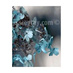Blue Gray Wall Art, Flower Photography, Hydrangea, Pastel, Neutral,... (£25) ❤ liked on Polyvore featuring home, home decor, wall art, photography wall art, pastel wall art, flower home decor, framed photography wall art and paper wall art