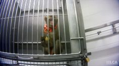 Demand Justice for Grace, Victim of Cruel Research Lab >https://www.change.org/p/demand-justice-for-grace-victim-of-cruel-research-lab