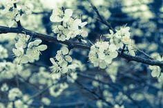 Spring !! Photo by pratyush gautam -- National Geographic Your Shot