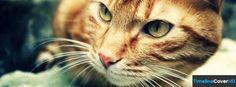 Vintage Cat Facebook Cover Timeline Banner For Fb Facebook Cover