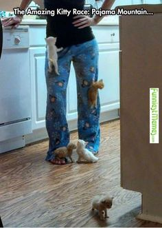 Funniest Memes - and like OMG! get some yourself some pawtastic adorable cat apparel!
