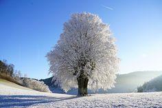 Zimná Krajina, Strom, Inovať