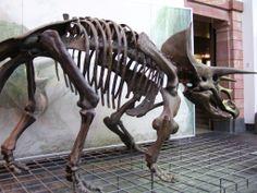 Naturmuseum Frankfurt – Senckenberg Museum , Germany   Patrick Nouhailler's Pictures