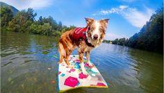 GoPro Channel   Surfdog on a RUFFadventure