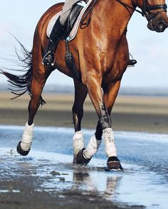 Horse exercising on the beach.