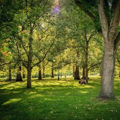 Glowing light 😊🌳☀️🇬🇧 #london #greenpark #garden #park #nikon #d810 #NikonNoFilter #visitlondon #green #sunny #summer #relax