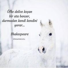 Öfke delice koşan bir ata benzer, durmadan kendi kendini yorar... - William Shakespeare