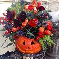 пора заказывать тыковки#хеллоуин #тыква #тыкванахэллоуин #тыквасцветами