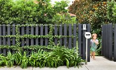 Podocarpus falcatus hedge. Magnolia 'Exmouth' on right. Bougainvillea trained to stainless steel wires on custom timber fence. Robert Plumb 'Mrs Kelly' letterbox beside Agapanthus sp. Randwick, NSW Australia. Anthony Wyer + Associates www.anthonywyer.com