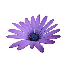 vintage-Tao (20).png ❤ liked on Polyvore featuring flowers and purple