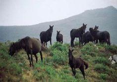 Puerto Rico, Asturian, Asturias Spain, Blue Jay, Pony, Horses, Country, World, Animals