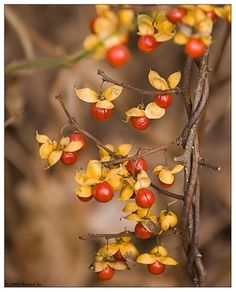 photo: autumn colors ...