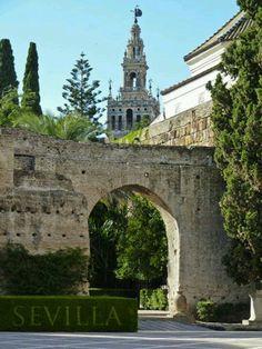 Patio de la Montería in the Reales Alcázares, with La Giralda belltower in the background, Seville, Spain