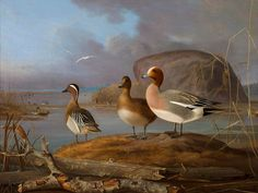 Magnus von Wright - Pair of Wigeons and a Male Teal