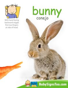 Teach your baby the sign for BUNNY with this free printable poster. www.BabySignsToo.com #Baby Signs