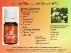 Roman Chamomile Essential Oil www. Essential Oils Guide, Therapeutic Grade Essential Oils, Essential Oil Uses, Yl Oils, Doterra Oils, Young Living Oils, Young Living Essential Oils, Chamomile Essential Oil, Perfume