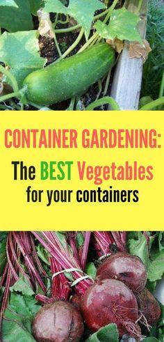 There vegetables are perfect for growing in containers! Take a look to see which vegetables you should be adding to your vegetable garden! #vegetablegarden #gardenideas #vegetables #gardeningtips