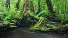 Marysville Victoria, Gods Creation, Perfect Place, Trail, Waterfall, River, App, Places, Green