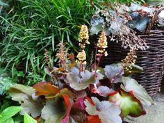 Így gondozd a növényeid környezettudatosan | Balkonada Plants, Planters, Plant, Planting