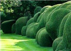 funny shaped garden