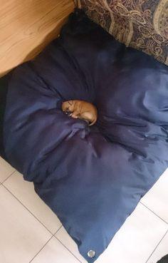 Secondo voi è troppo grande il cuscino o troppo piccolo il cucciolo che ci dorme sopra?  Buongiorno e buon lunedì