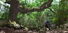 La Almoraima. Entretenimiento South Of Spain, Cadiz, Andalucia, Plants, Travel, Elopements, Entertainment, Traveling, Viajes