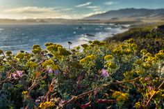 Pacific Coast Highway- Flowers in Big Sur by CurbsideCapture on Etsy  #PacificCoastHighway #PCH #California